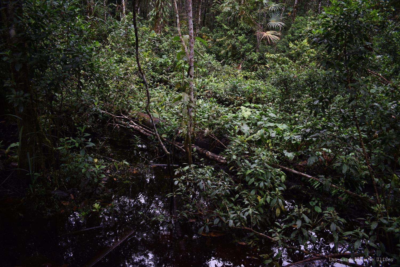amazonia ecuatoriana selva